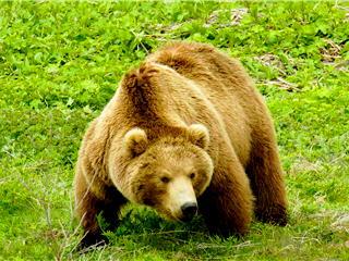 Где купить мясо медведя в Екатеринбурге