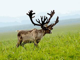 Где купить мясо оленя в Екатеринбурге