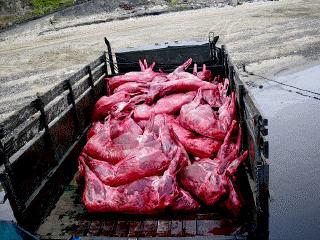 Продажа оленьего мяса в Екатеринбурге